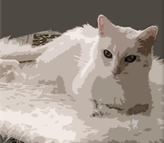 Schilderij van kat